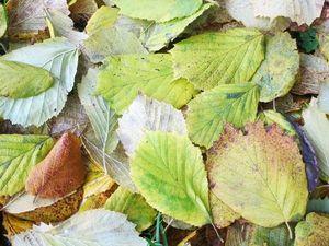 Рисует Осень.... Ярмарка Мастеров - ручная работа, handmade.