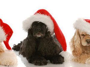 Декоративная фигурка собаки – лучший подарок в Новый 2018 год!. Ярмарка Мастеров - ручная работа, handmade.