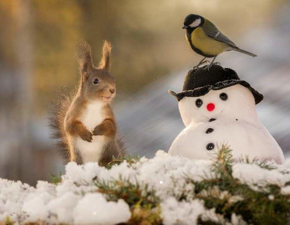 Фото милые животные утром в снегу