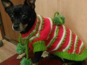 Теплый свитерок отправился греть той-терьерчика.. Ярмарка Мастеров - ручная работа, handmade.
