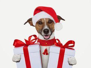 Подарите подарок животным из приюта - Сбор помощи   Ярмарка Мастеров - ручная работа, handmade