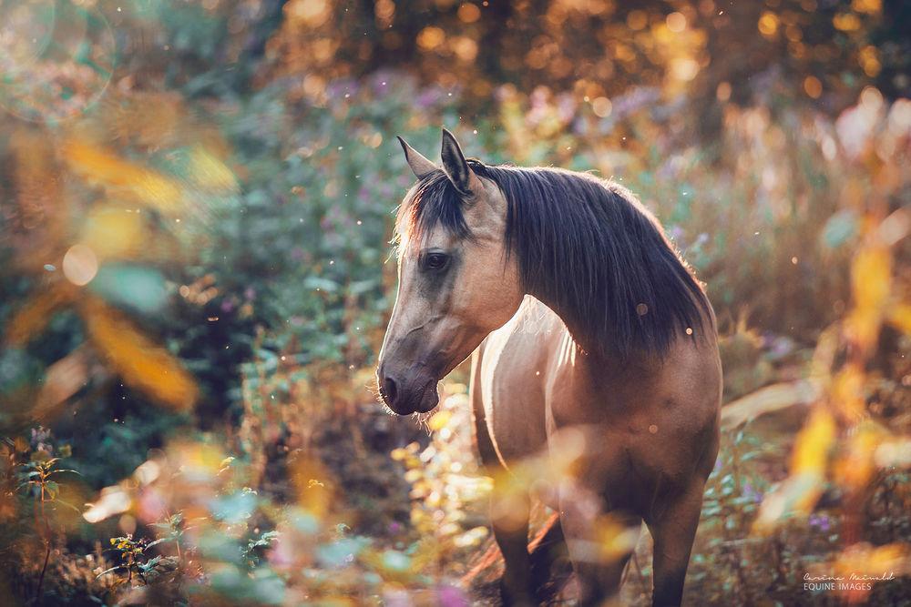 создает картинки мой конь валентинки только возлюбленным
