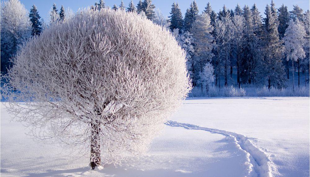 гутное стекло, дерево на бутылке, батик на стекле, витражная зима, рисунок на бутылке