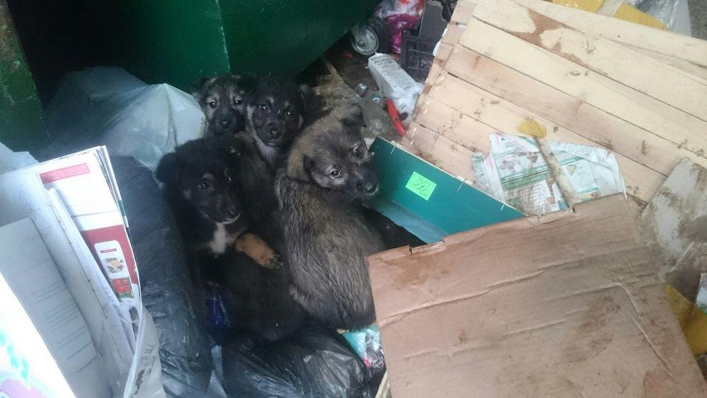 аукцион, помощь животным, благотворительность