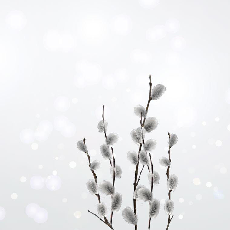 фотокартина, фотокартины, белый, серый, весна