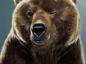 Не будите русского медведя,стихотворение. | Ярмарка Мастеров - ручная работа, handmade