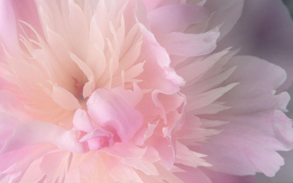салатовый, розовое платье