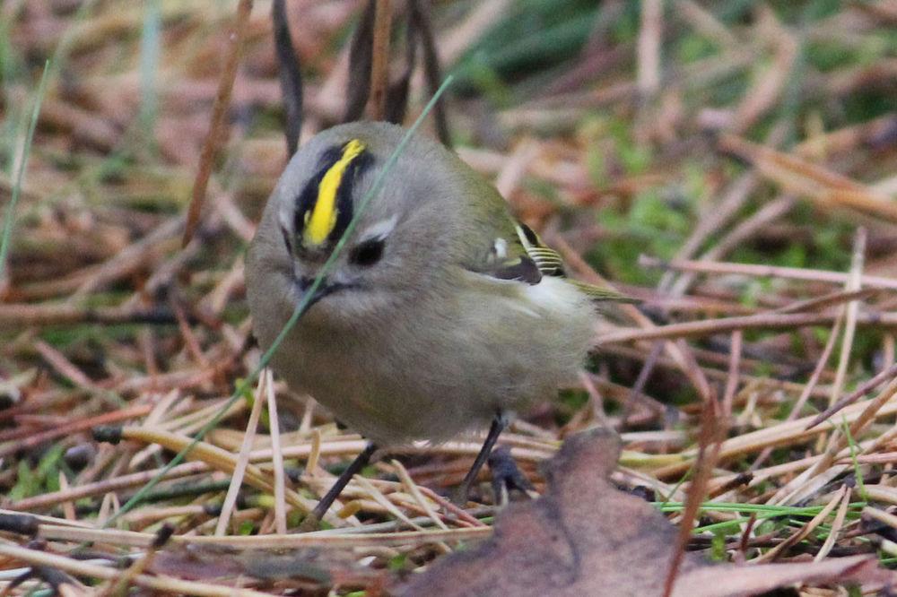 птицы калининградской области фото с названиями определиться