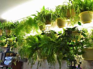 Вертикальное содержание комнатных растений. Ярмарка Мастеров - ручная работа, handmade.