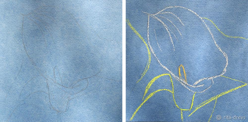 Рисуем пастелью изящный цветок каллы, фото № 2