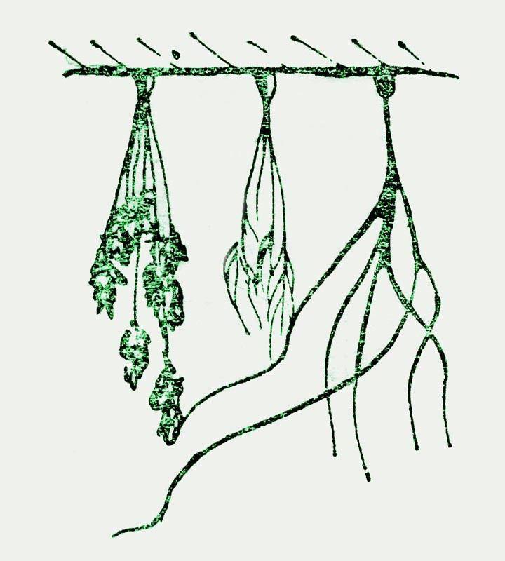 флористика, консервация в глицерине