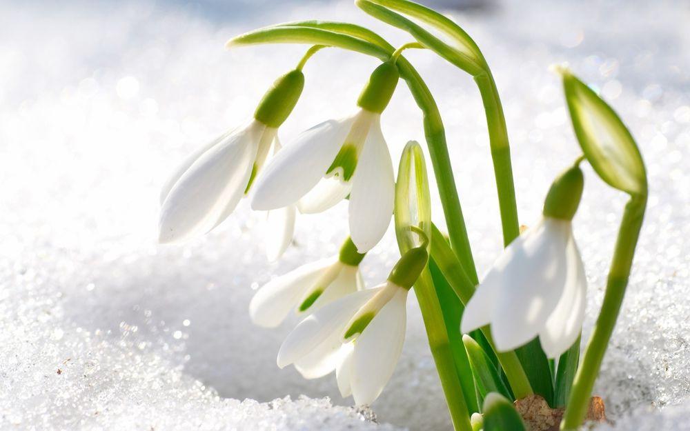 с праздником 8 марта, поздравляю всех женщин ям