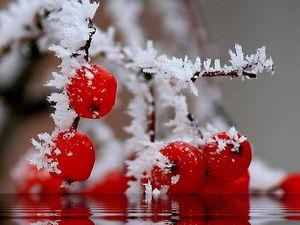 "Аукцион ""Щедрый ноябрь"" открыт!. Ярмарка Мастеров - ручная работа, handmade."