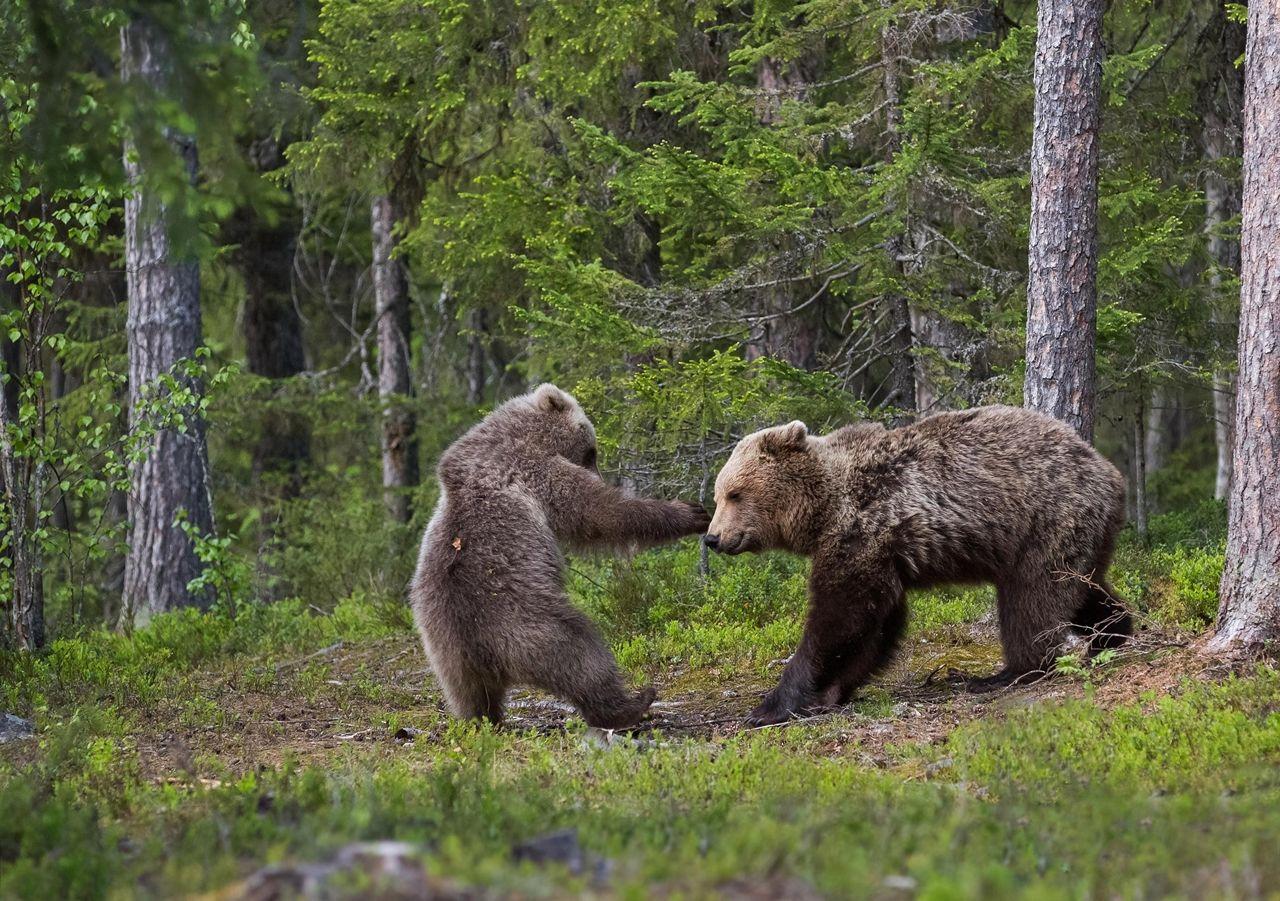 прикольные картинки природа и звери