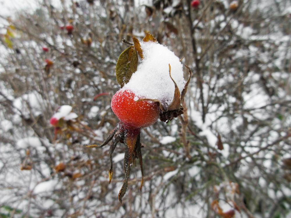 декабрь, снег кругом