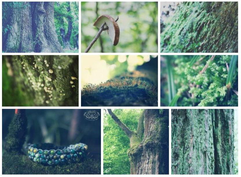 цитата, шамбала, лес, лето, браслет, авторские украшения, агат, бирюза, грибы, фотография, коллаж, дерево, деревья, мох