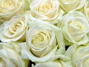 Белые розы, белые розы, никаких вам шипов!. Ярмарка Мастеров - ручная работа, handmade.