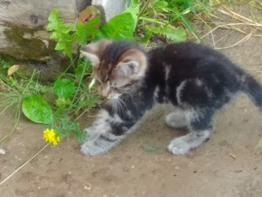 котята, рыжий котенок