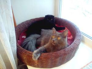 Наши котомодели | Ярмарка Мастеров - ручная работа, handmade