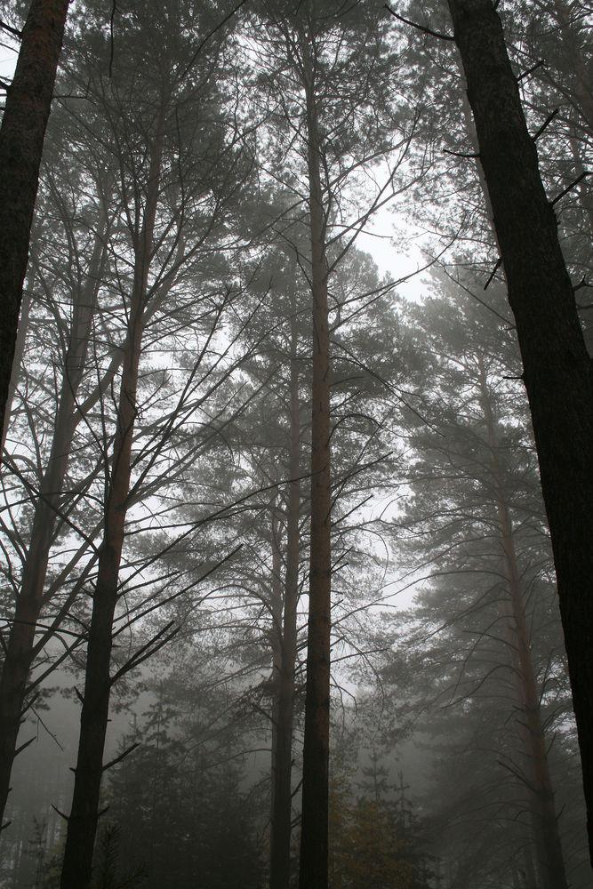 оченний туман