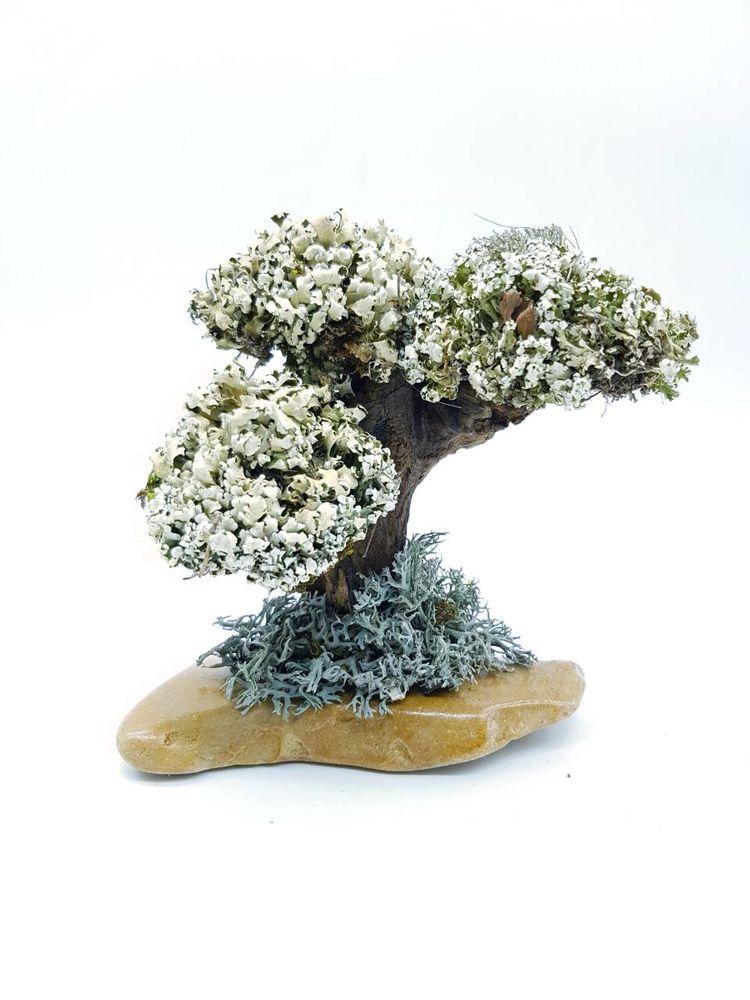 дорогой подарок маме, подарок начальнику, декоративное деревце, подарок тёще, деревья из цетрарии, cetraria.ru, ирландский мох