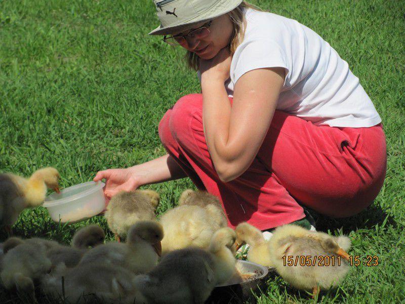 куры, компост, люблю животных, удобрение