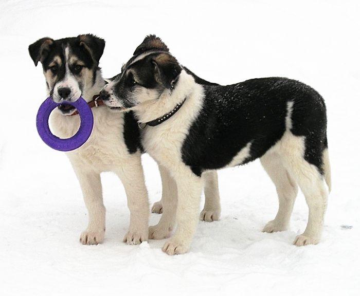 собака в добрые руки, взять щенка