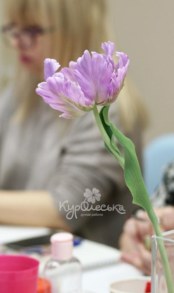 мк попугайный тюльпан