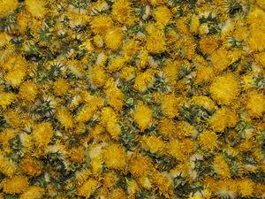 Одуванчик лекарственный. Цветки (цветы, цветочки). Ярмарка Мастеров - ручная работа, handmade.