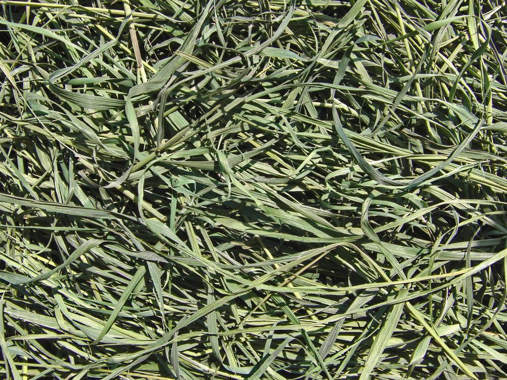 травушка-муравушка, дикие травы на заказ, доставка почтой по россии, травяные сборы, фитосборы фито-сборы, пырей