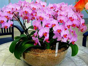Орхидея в косметологии. Ярмарка Мастеров - ручная работа, handmade.