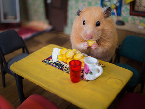 A City of Hamsters: The Hungry Hungry Hamsters Large-Scale Miniature. Livemaster - handmade