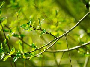 Он пахнет так вкусно, листочек зелёный. Ярмарка Мастеров - ручная работа, handmade.