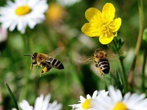 Как изменится мир, если исчезнут пчёлы ?. Ярмарка Мастеров - ручная работа, handmade.