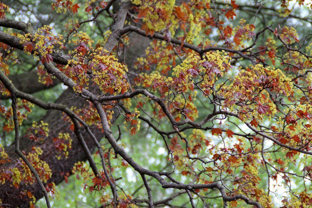 осень, осенний, осенние краски, осенние листья, осенний пейзаж, жёлтый, бордо, фотокартина осень, фотокартина осенняя