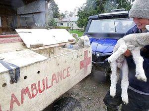 Lambulance – скорая помощь для ягнят. Ярмарка Мастеров - ручная работа, handmade.