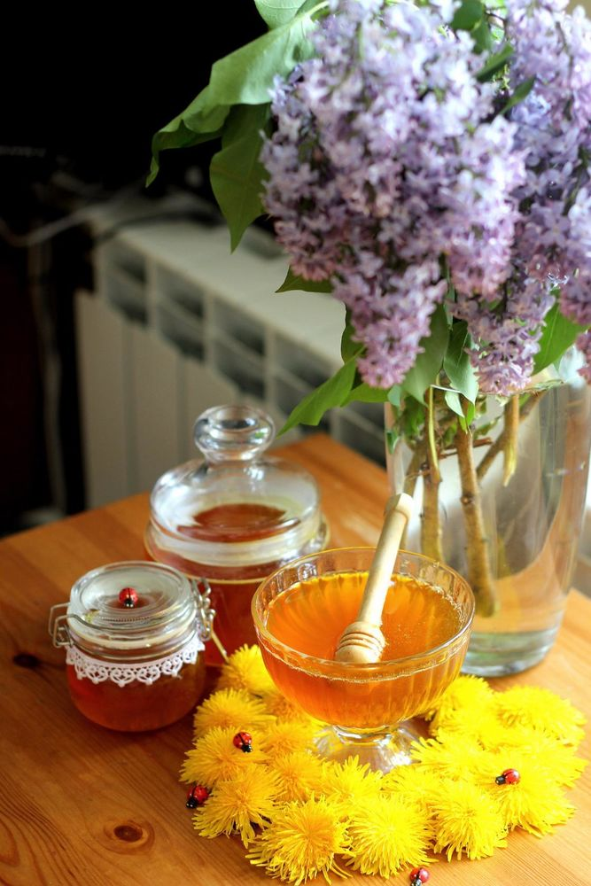 одуванчиковый мед, весна