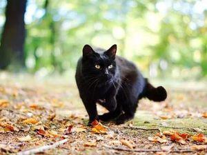 В пятницу 13 брошка-кошка 313 руб!. Ярмарка Мастеров - ручная работа, handmade.