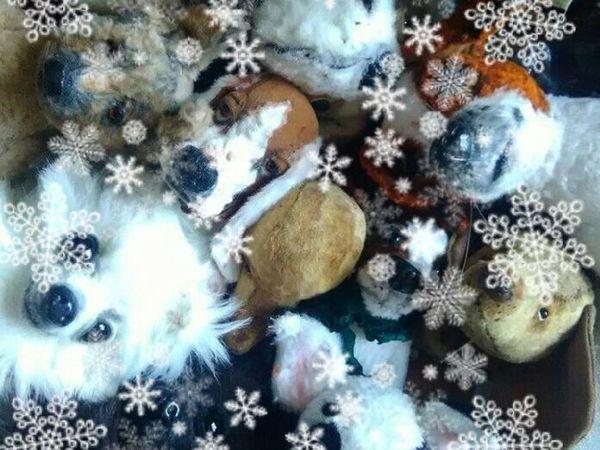 Собачий Вальс 2, онлайн-курс.   Ярмарка Мастеров - ручная работа, handmade