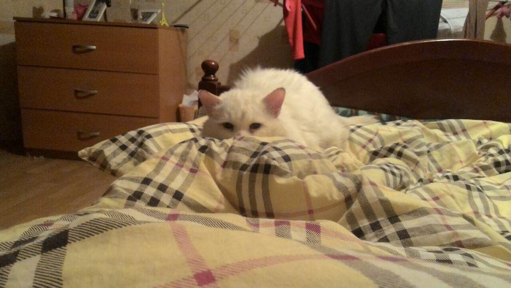 кот в беде, нужна помощь котенку