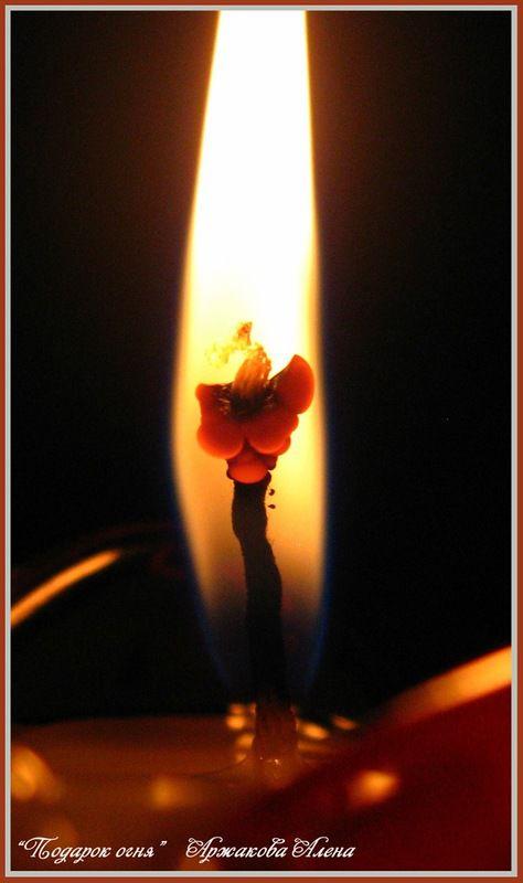цветы, огонь, красивое фото, чудеса, любовь