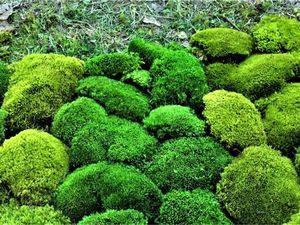 Стабилизированный мох — что это. Ярмарка Мастеров - ручная работа, handmade.