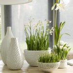 spring-flowers-new-ideas-snowdrops-and-crocus11.jpg