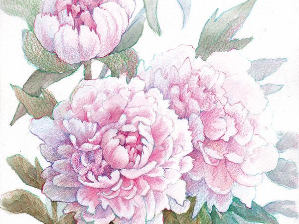 Реалистичное изображение розовых пионов в смешанной технике (акварель и цветные карандаши)