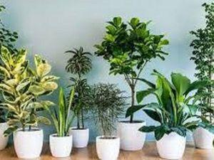 Полезные растения в доме. Ярмарка Мастеров - ручная работа, handmade.
