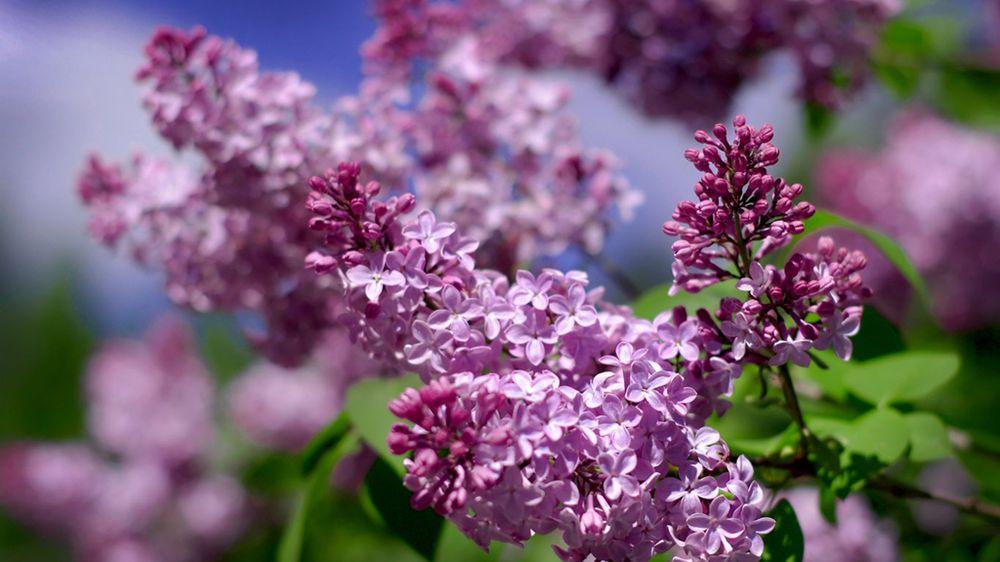 Что говорят цветы.....!!!!, фото № 11