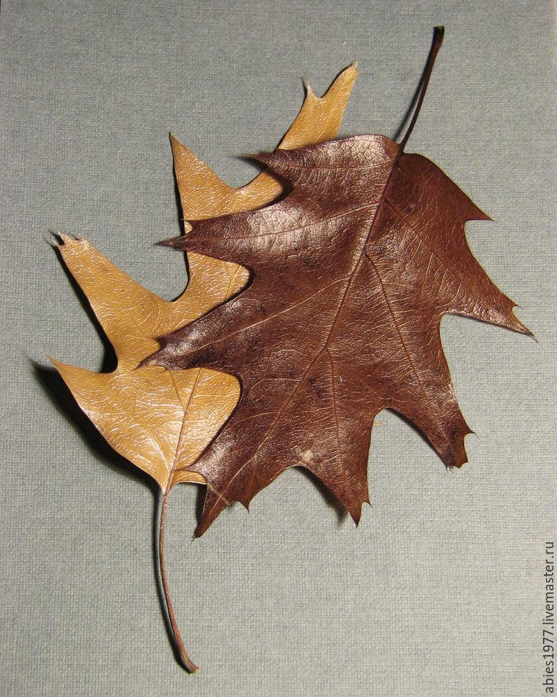 консервированные листья, из природных материалов, oak