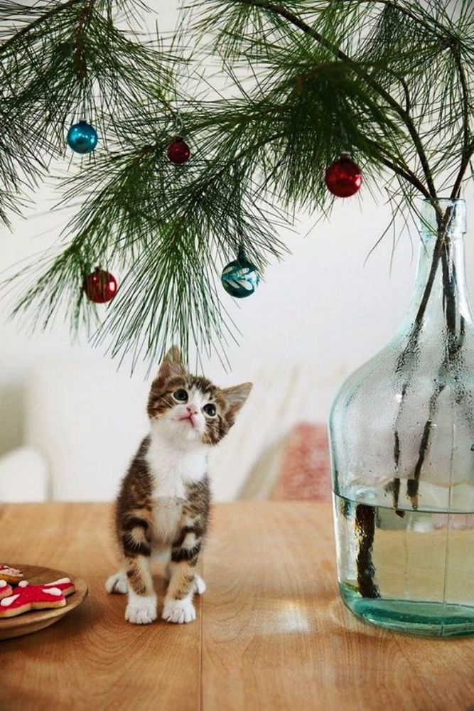 Christmas Cats! And a Little About the Safety of Pets During the Holidays, фото № 19
