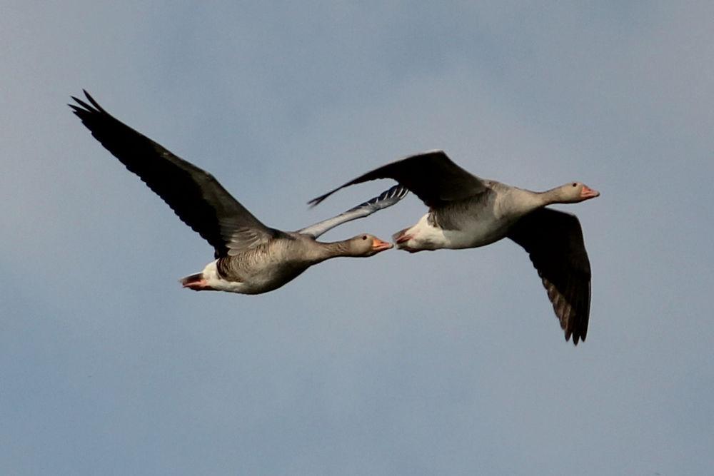 них птицы калининградской области фото с названиями производителем цена официального