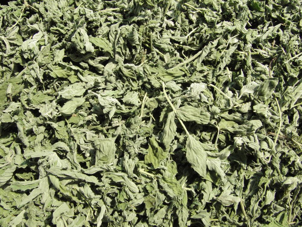 лист березы белой, дикого майского коричного